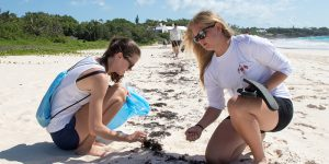 Mudratz, beach cleanup, bermuda