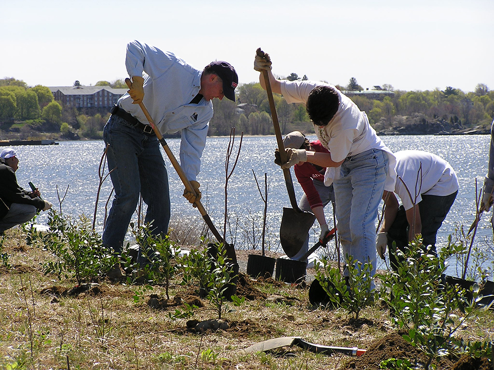Buffer creation and coastal vegetation planting in Providence. Photo credit: Save The Bay