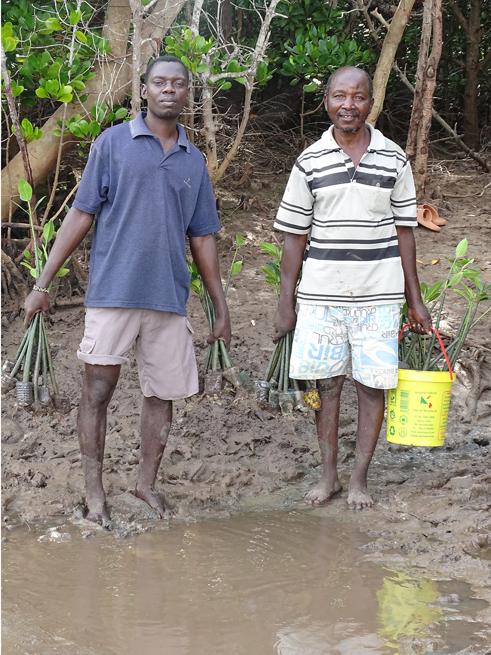 Community members carrying mangrove seedlings in Giriama (Robinson Island), Kenya. Photo credit: Seacology