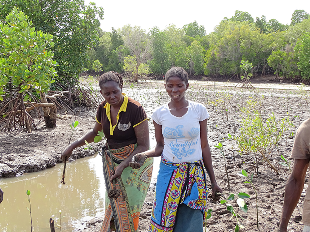 Community members during mangrove replantation in Giriama (Robinson) Island, Kenya. Photo credit: Seacology