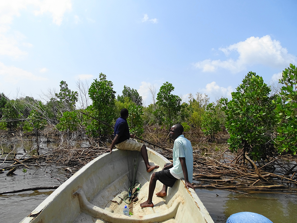 Community members exploring degraded areas of mangroves. Photo credit: Seacology