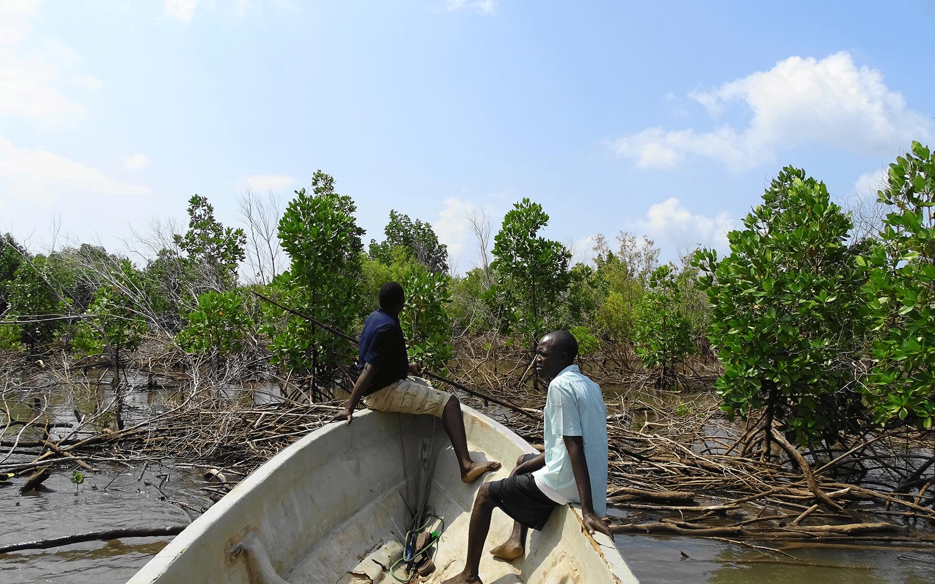 Mangrove conservation and restoration in Giriama (Robinson) Island, Kenya. Photo credit: Seacology