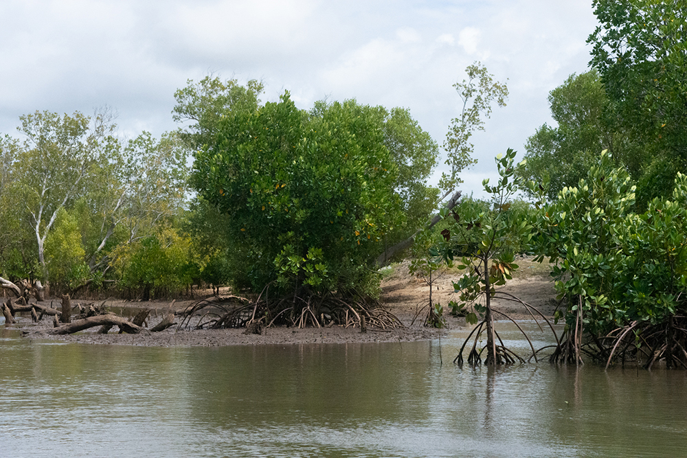 Mangrove conservation and restoration in Giriama (Robinson) Island, Kenya. Photo credit: Seacology