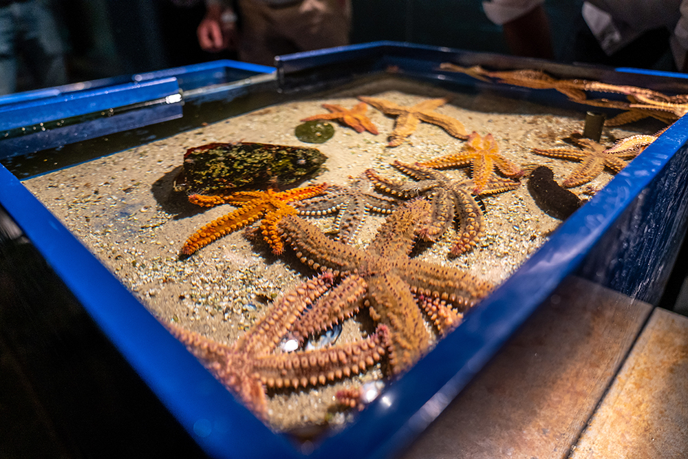 Starfish exhibit at Station Marine de Concarneau. Photo credit: Kristi Wilson