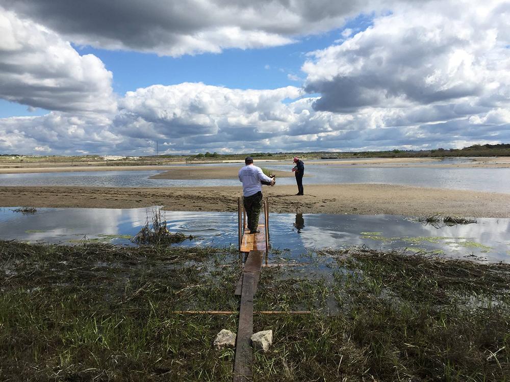 Salt Marsh adaptation planting. Photo credit: Save The Bay