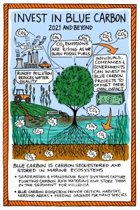 Invest in Blue Carbon