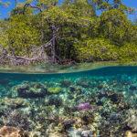 Coral Reef in Raja Ampat, Indonesia, Over/Under Credit: Alex Mustard