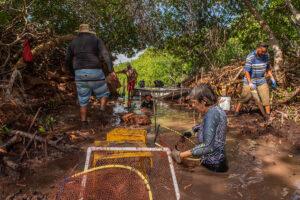 Volunteers restore mangroves in Lac Bay, Bonaire. Photo credit: Lorenzo Mittiga / Ocean Image Bank