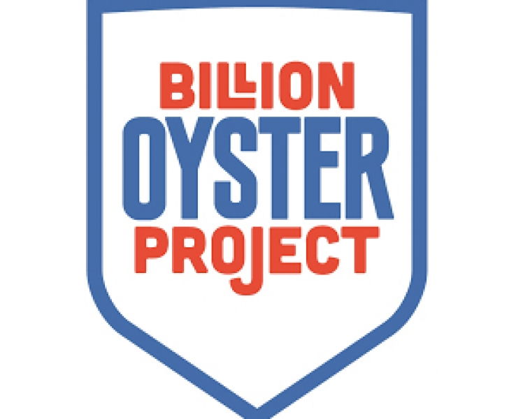 Nature's Water Filters: Restoring Oyster Reefs in New York